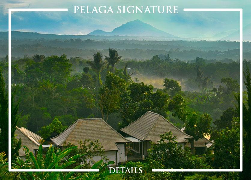 Pelaga Signature package thumbnail